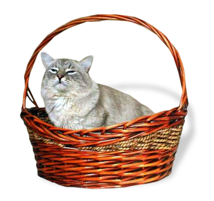 Z Kociego Domupl Hodowla Kotów Syberyjski Neva Masquerade O Rasie